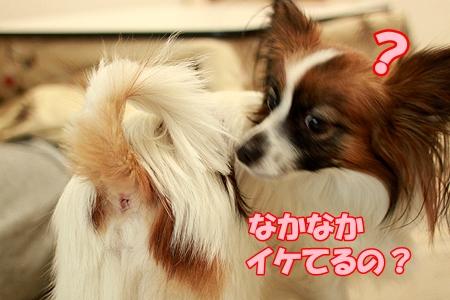 4_20120108001509.jpg