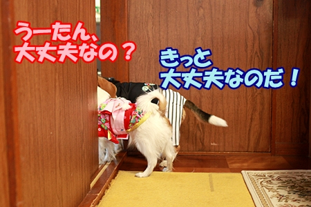 4_20120109012304.jpg