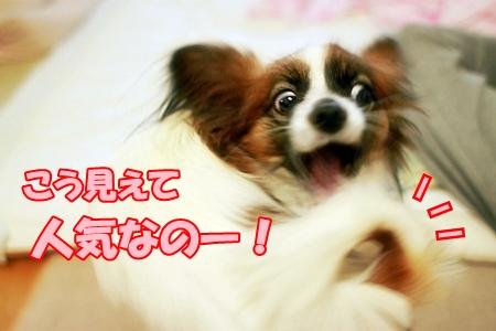 4_20120125225211.jpg