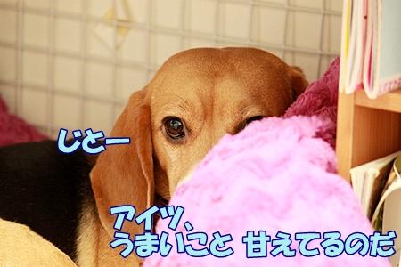 4_20120127225634.jpg