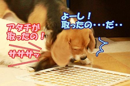 4_20120201224738.jpg