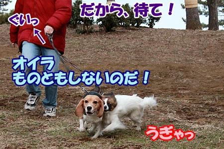 4_20120216223654.jpg