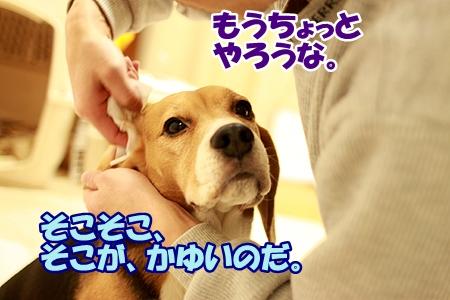 4_20120225000453.jpg