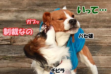 4_20120307222714.jpg