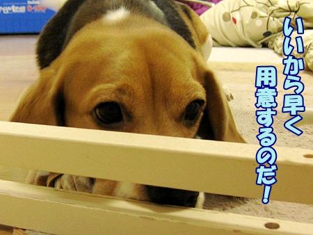 4_20120329220536.jpg