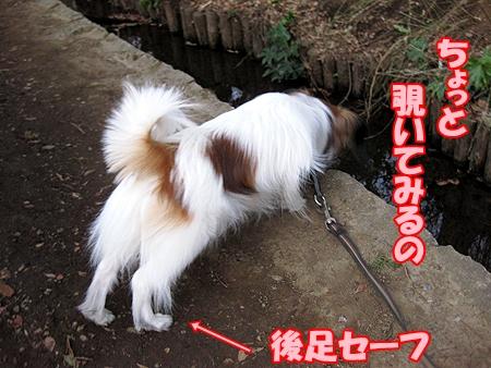 4_20120331002516.jpg