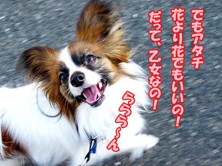 4_20120408231808.jpg