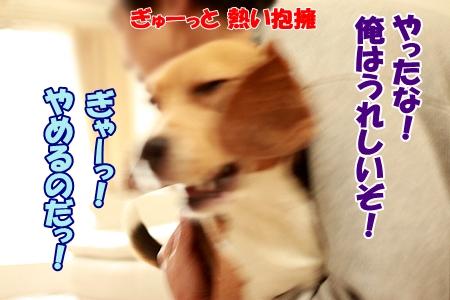 5_20120102233907.jpg