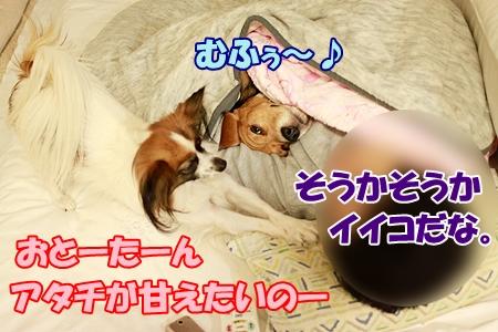 5_20120105202524.jpg