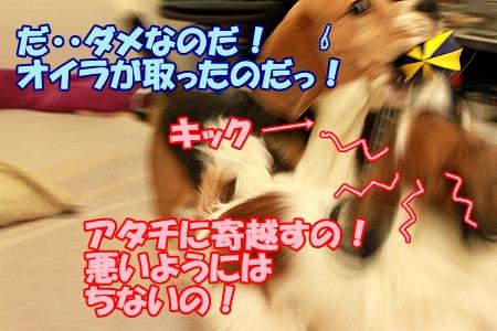 5_20120201224737.jpg