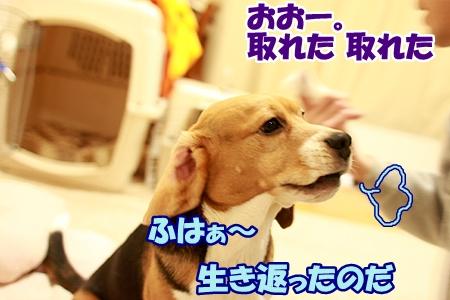 5_20120225000453.jpg