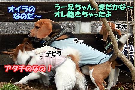 5_20120304205632.jpg