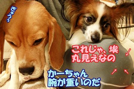 5_20120329220535.jpg