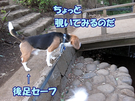 5_20120331002515.jpg