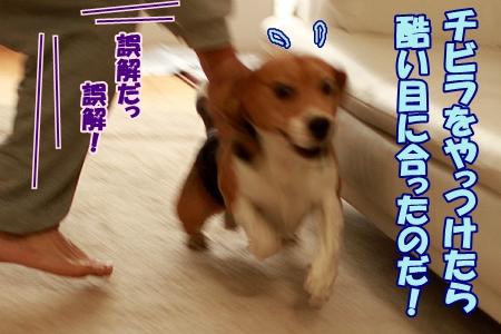 6_20120102233907.jpg