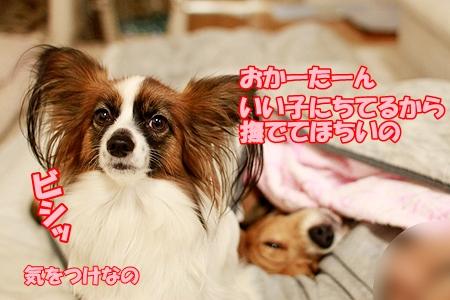 6_20120105202524.jpg