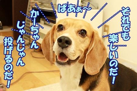 6_20120201224737.jpg