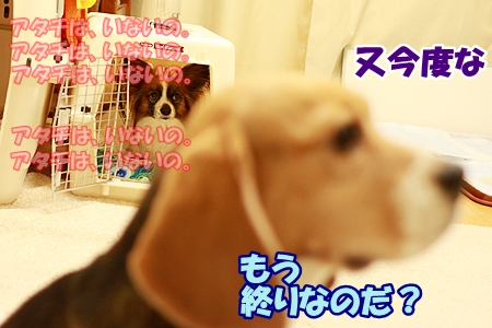 6_20120225000453.jpg