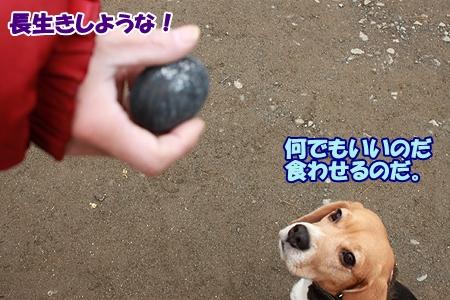 6_20120320220447.jpg