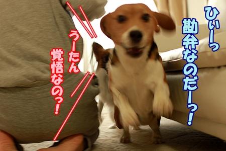 7_20120102233907.jpg