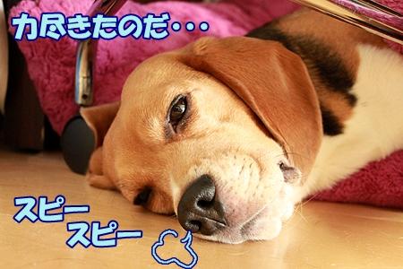 7_20120203222830.jpg