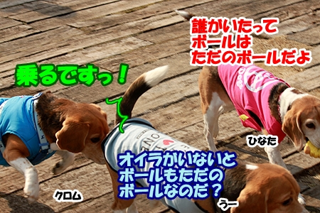7_20120308230455.jpg
