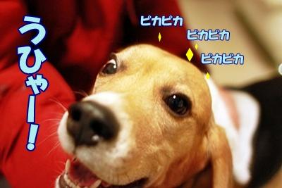 9_20111211154628.jpg