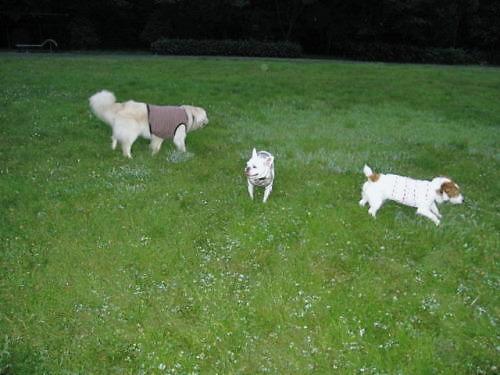 2011長岡公園561