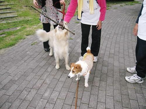 2011長岡公園573