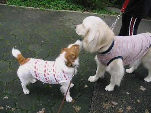 2011長岡公園581