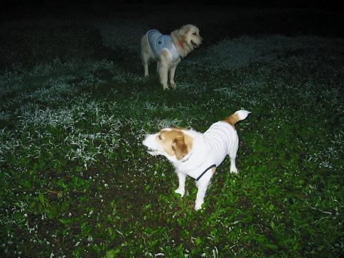 2011長岡公園599