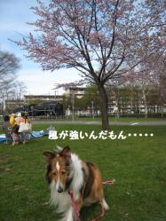 IMG_9720-1.jpg