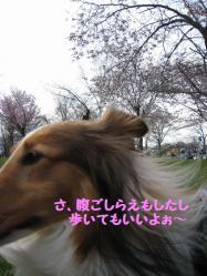 IMG_9733-1.jpg