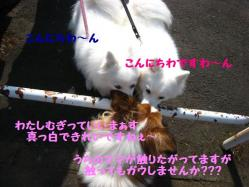 IMG_9749-1.jpg