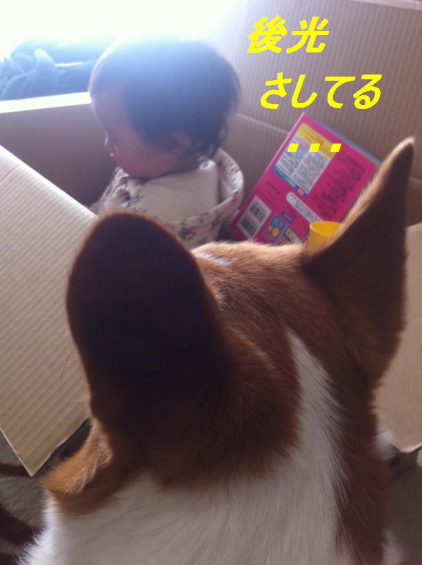 IMG_3258_20120328213342.jpg