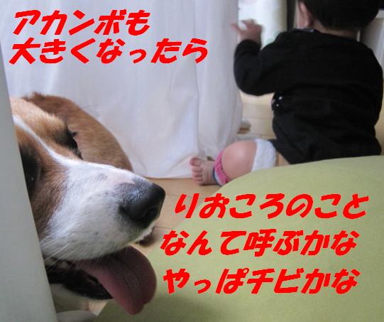 IMG_4533.jpg