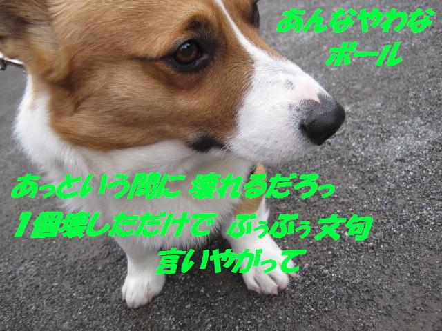 IMG_5210_20120223225241.jpg