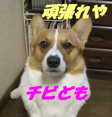IMG_5338.jpg
