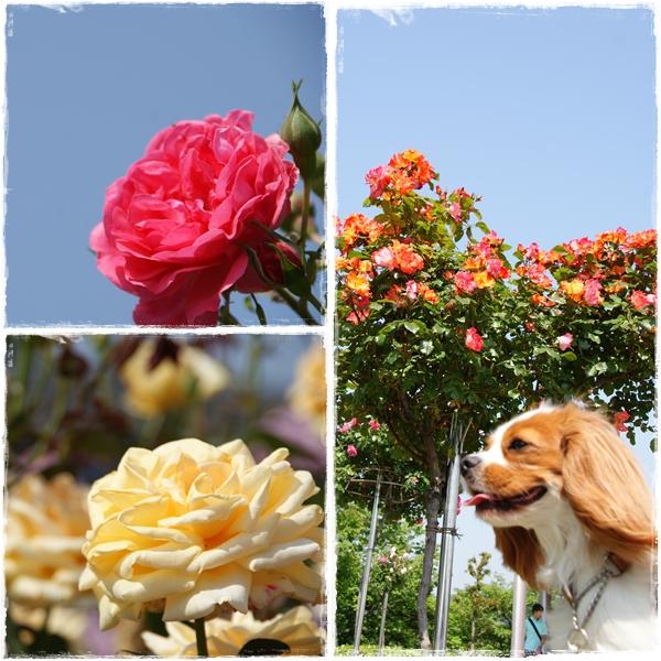 2011-05-18-3.jpg