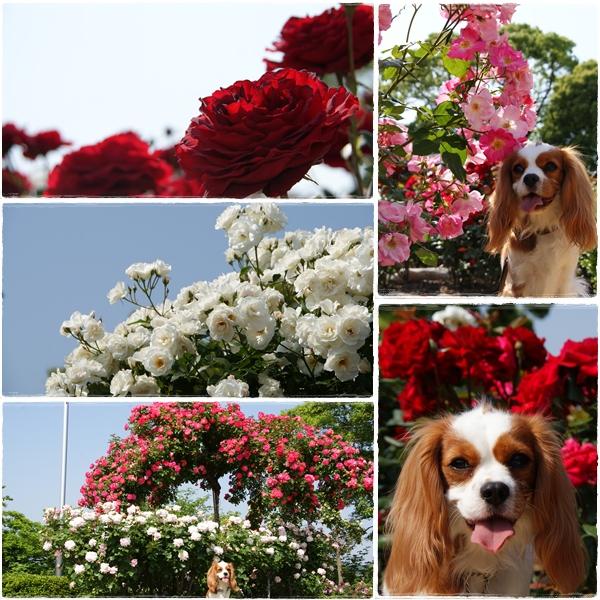 2011-05-18-4.jpg