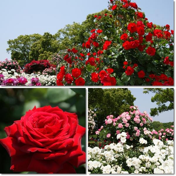 2011-05-19-1.jpg