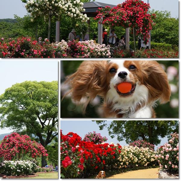 2011-05-19-4.jpg