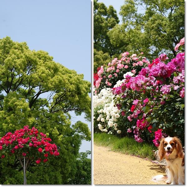 2011-05-19-5.jpg