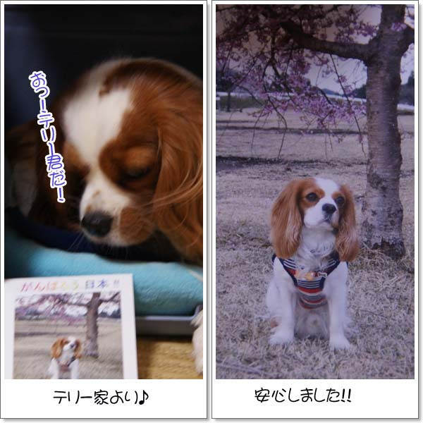 2011-5-9_2.jpg