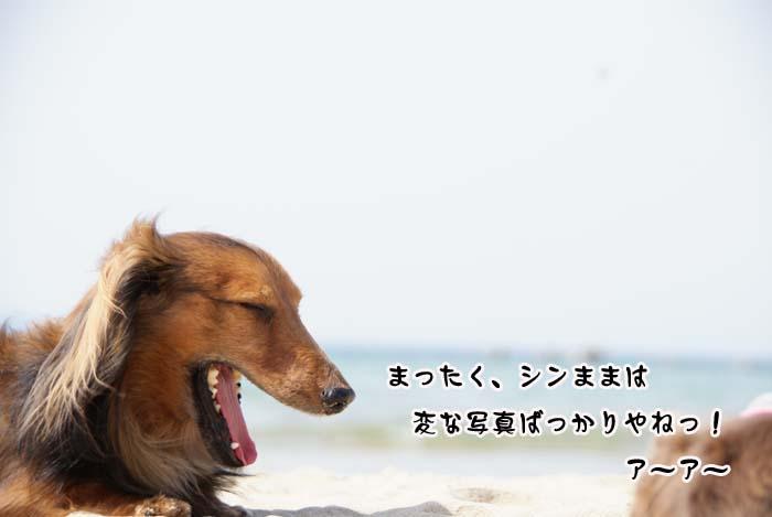 20110410_325.jpg
