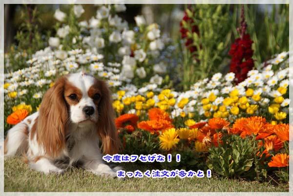 20110425_201.jpg