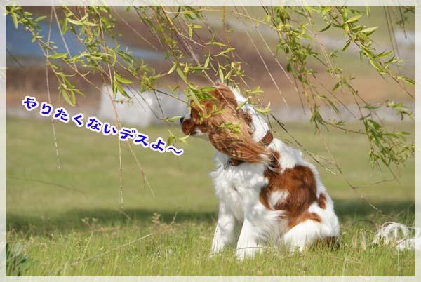20110425_64.jpg