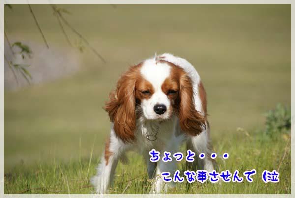 20110425_70.jpg