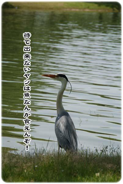20110519_171.jpg