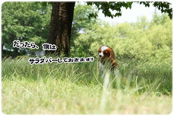 20110519_181.jpg